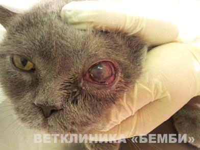 169Что делать когда у кошки красный глаз